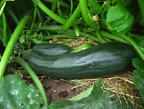 zucchinis-after